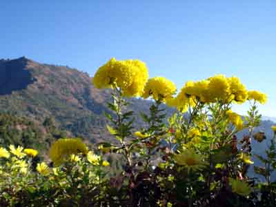 flowers in shimla