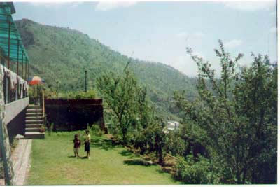 view of lush green lawn and fruit trees